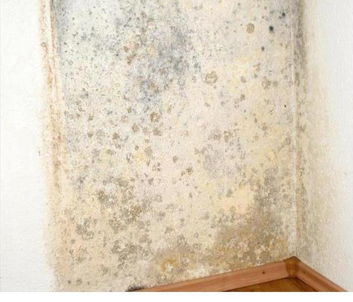 Mold and Air Quality